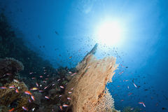 Ocean, sun and fish Stock Images