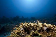 Ocean, sun and fish Royalty Free Stock Image