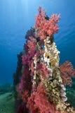 Ocean, sun and fish Royalty Free Stock Photo