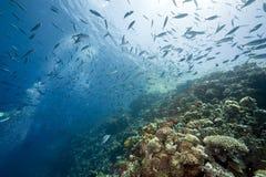 Ocean, sun and fish Stock Photography