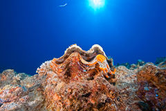 Ocean, sun and giant clam Stock Image