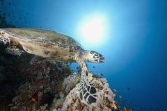 Ocean, sun and hawksbill turtle Stock Photo