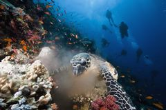 Ocean, sun and hawksbill turtle Royalty Free Stock Photos