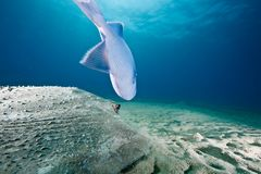 Ocean, sun and porcupine ray Stock Images