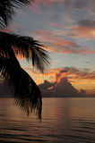 Ocean sunrise. Tropical sunrise and ocean with palm tree Royalty Free Stock Photo