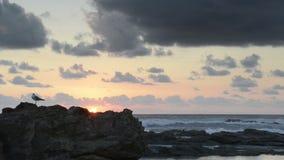 Ocean Sunrise Bird stock video