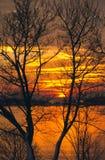 Ocean Sunrise Through Leafless Trees. A sunrise over the Atlantic ocean is seen through leafless trees Stock Photos