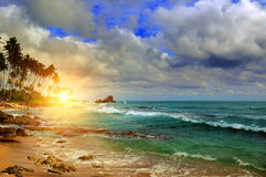 Ocean, sunrise and tropical palm trees on the shore Stock Images