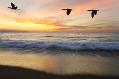 Ocean Sunset Birds Royalty Free Stock Images