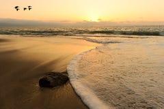 Ocean Sunset Birds Royalty Free Stock Photos