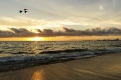 Ocean Sunset Birds Royalty Free Stock Image