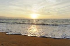 Ocean Sunset Birds Royalty Free Stock Photography
