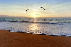 Ocean Sunset Birds. Is an ocean sunset with a a flock of bird silhouettes flying towrd the light of inspiration Royalty Free Stock Photos