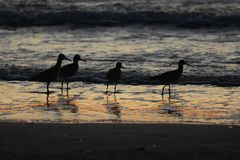Ocean sunset with birds Royalty Free Stock Photos