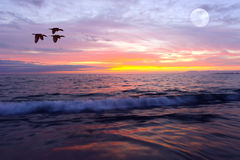 Ocean Sunset. Is a brightly lit golden seascape with a gentle wave rolling to the shore royalty free stock photo