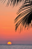 Ocean sunset and palm tree Royalty Free Stock Photography