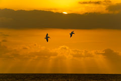 Ocean Sunset Sky Clouds Peacful Flying Birds Stock Photo