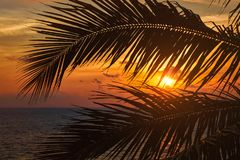 Ocean sunset visible through palm leaves stock images