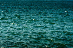 Ocean Surface Stock Image