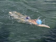 Ocean swimmer Stock Photography