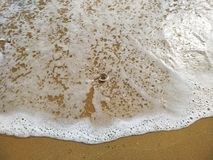 The shell itself in the ocean stock image