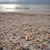 Ocean treasures Stock Image