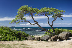 Ocean and tree Royalty Free Stock Photos