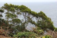 Ocean tree Stock Image