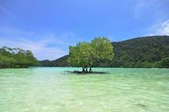 Ocean tree scene Stock Images