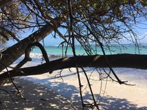 Ocean through trees. Puerto Rico Vacation Stock Photos