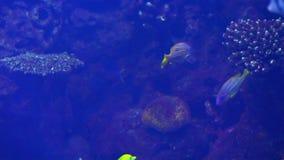 Ocean tropical fish in seawater Aquarium. 1 stock video