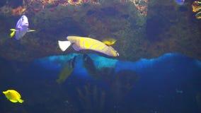 Ocean tropical fish in seawater Aquarium. 1 stock footage