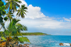 Ocean and tropical palm trees Royalty Free Stock Image