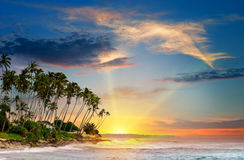 Ocean, tropical palms and a beautiful sunset Royalty Free Stock Images