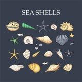Ocean tropicar exotic set with sea shells. royalty free illustration
