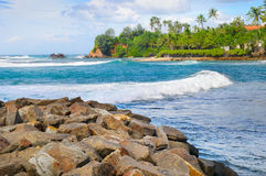 Ocean, tropikalne palmy na brzeg i chmurny niebo, Obrazy Stock