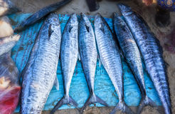 Ocean Tuna sold in the fishing village Royalty Free Stock Photos
