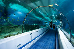 Ocean Tunnel. Underwater Tunnel of Modern Sea & Ocean Theme Park - it is a superb way to learn about sea and ocean life royalty free stock images