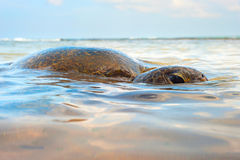 Ocean turtle Royalty Free Stock Photos