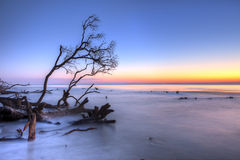 Ocean at twilight. Ocean and fallen trees at twilight, hdr image Stock Photography