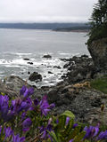 Ocean view. Patrick's point state park on the california coast royalty free stock photography