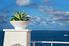 Ocean view. Plant perched on the edge of a cliff-top terrace looking out over a tropical ocean royalty free stock photo