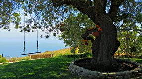Ocean View Garden. With tree swing Royalty Free Stock Image