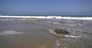 Ocean view in Marcona, Peru stock footage