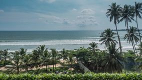 Ocean View Palm Timelapse 4k. Timelapse of some palm trees with the ocean in the background in Sri Lanka. 4k footage stock video footage