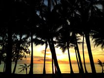 Ocean view and palm trees. Photograph of palm trees and beautiful ocean view Royalty Free Stock Image