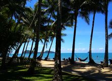 Ocean view and palm trees. Photograph of palm trees and beautiful ocean view Stock Photography
