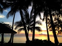 Ocean view and palm trees. Photograph of palm trees and beautiful ocean view Stock Photos