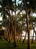 Ocean view and palm trees. Photograph of palm trees and beautiful ocean view Royalty Free Stock Photo