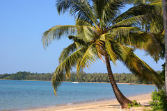 Ocean view and palmtree royalty free stock photos